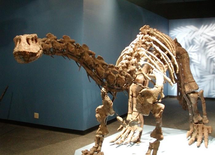 В Китае обнаружили мясо динозавра