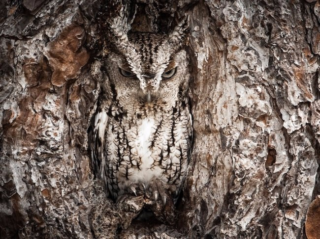 Зверские шедевры National Geographic2 (650x487, 399Kb)