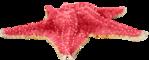 Превью Colorful Beach (62) (650x261, 188Kb)