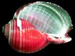 Превью Colorful Beach (66) (665x493, 362Kb)