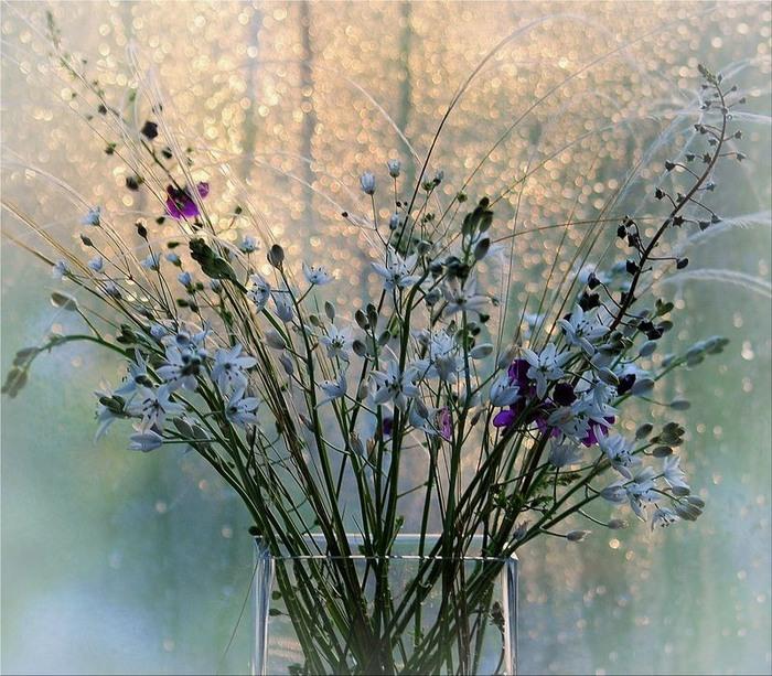 мелкие цветочки в вазе+++ (700x613, 158Kb)