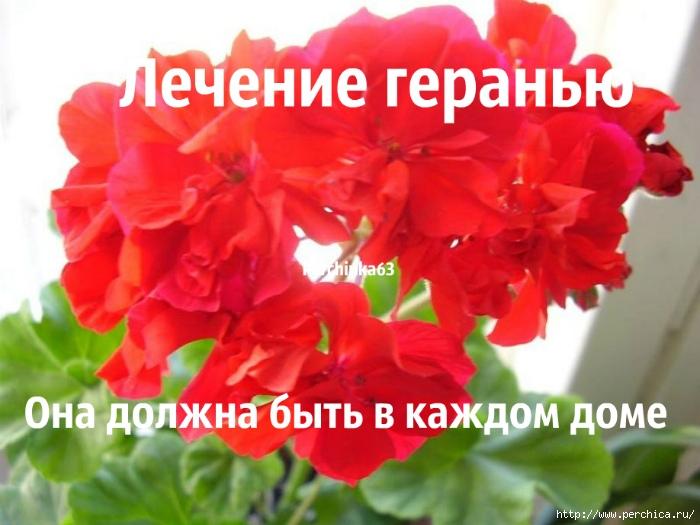 4979645_image (700x525, 217Kb)