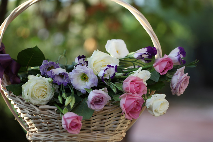 eustoma-foto-09 (700x467, 113Kb)
