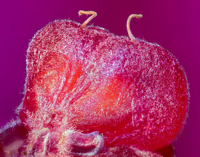 fruits 0 Почему надо мыть фрукты перед едой/4897960_0_7cb86_77f1adfd_XL (700x548, 293Kb)