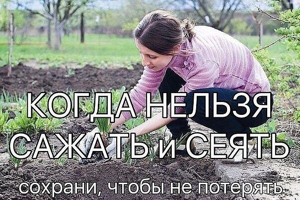 5177462_MHdr4naIbTE (604x404, 94Kb)