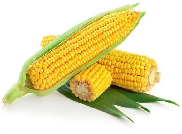 рецепты с кукурузой (583x430, 148Kb)