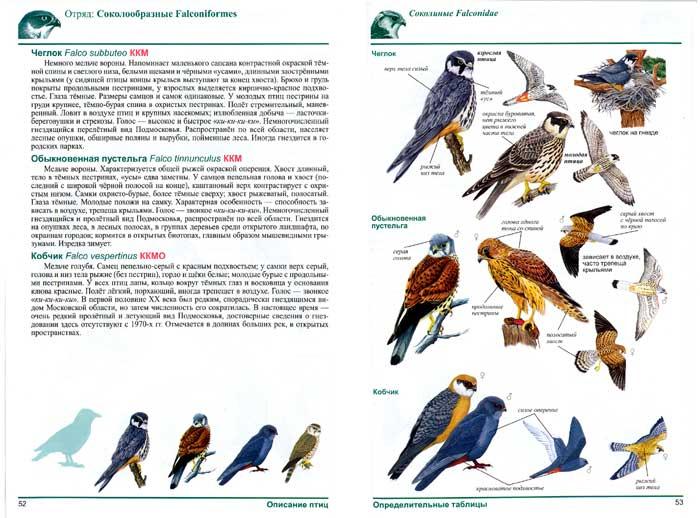 1. птицы отряд соколинообразные (700x518, 289Kb)