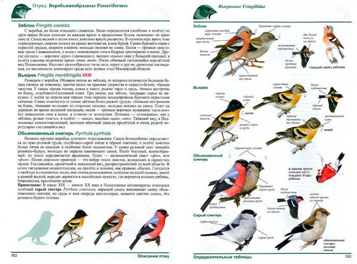 1. птицы зяблик... (700x518, 294Kb)