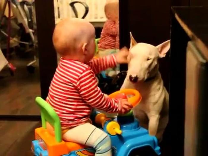 Ребенок играет с бультерьером