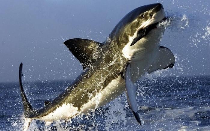 Смертельное оружие. Прыжок акулы