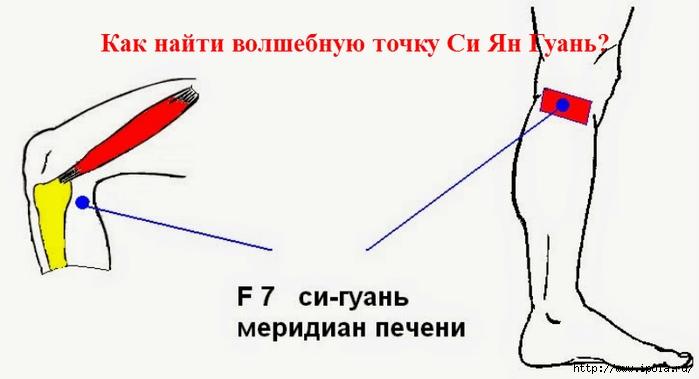 "alt=""Как найти волшебную точку Си Ян Гуань?""/2835299_Tochka_Si_Yan_Gyan (700x379, 102Kb)"