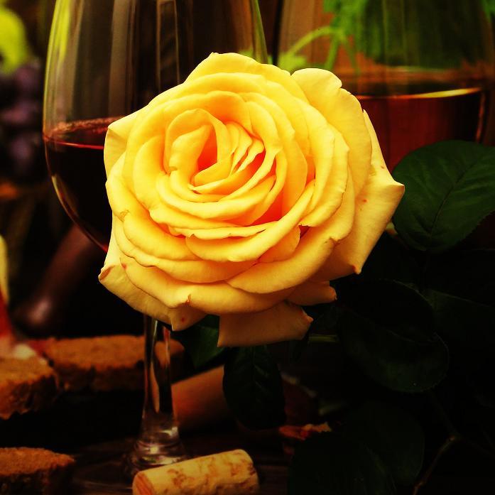 розы от ЛЭ.130547754_03 (697x697, 314Kb)