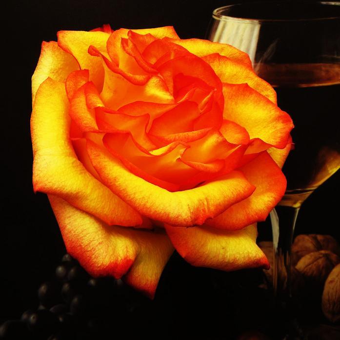 розы от ЛЭ.124233620_020 (697x697, 327Kb)