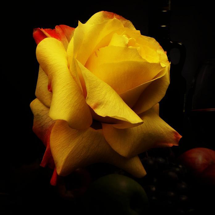 розы от ЛЭ.123799443_027 (697x697, 206Kb)