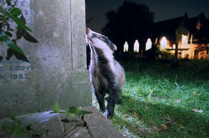 Дикие обитатели мегаполисов: фотографии животных в больших городах