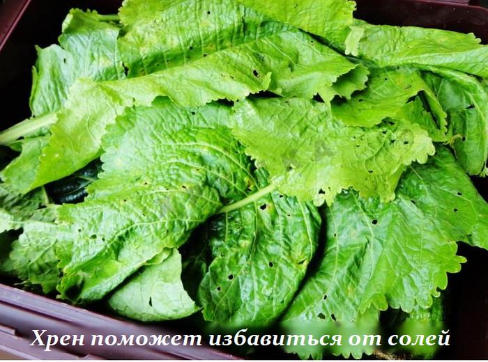 2749438_Sposob_s_hrenom_pomojet_izbavitsya_ot_solevih_otlojenii (700x520, 643Kb)