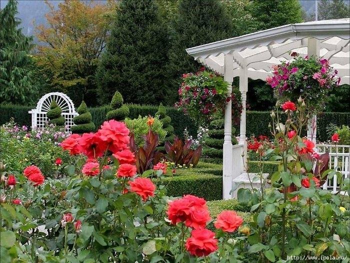 """alt=""""Сады с розами в цвету""""/2835299_30 (700x526, 345Kb)"""