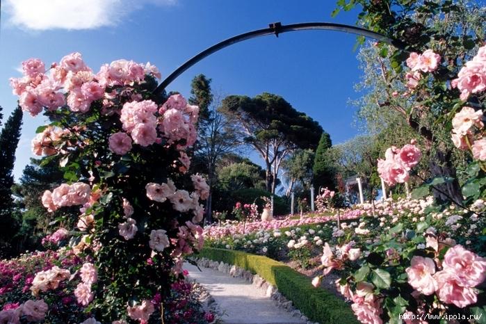 "alt=""Сады с розами в цвету""/2835299_SADI_S_ROZAMI (700x466, 364Kb)"