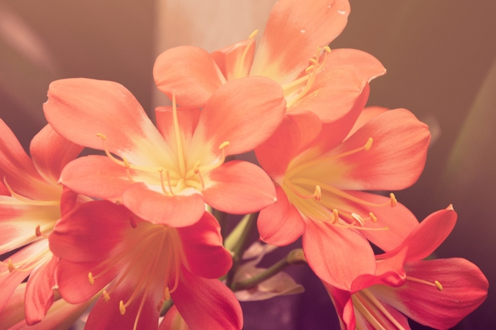 733907_naturesunnyredflowers (700x465, 192Kb)