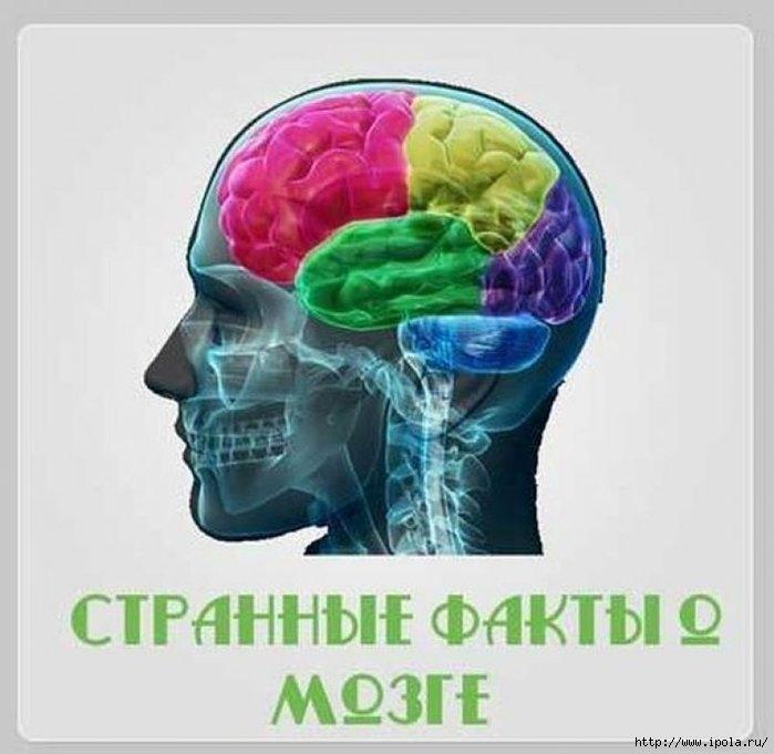 """alt=""""15странных фактов о мозге""""/2835299_0_805x784 (700x681, 149Kb)"""