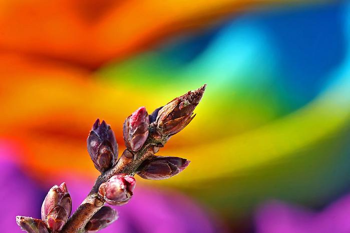 играет красками весна 3 (700x466, 270Kb)