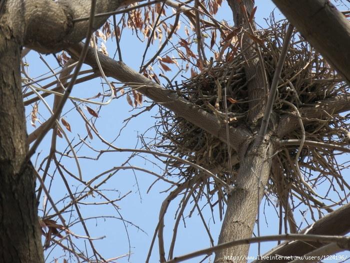 гнездо (700x525, 312Kb)