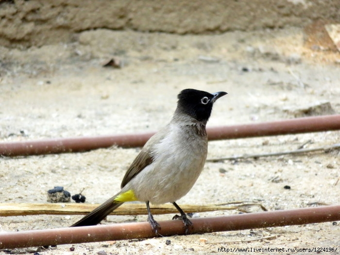 птица (700x525, 211Kb)