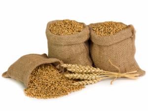 зерно (300x225, 54Kb)
