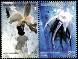 Орхидеи Босния и Герцоговина (251x189, 34Kb)