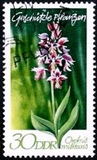 цветы ГДР 3 Орхидея (141x231, 28Kb)