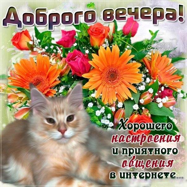 Добрый вечер хорошего настроения открытка
