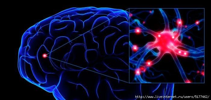 5177462_neuron (700x334, 125Kb)