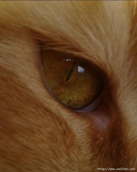 Фотографии и видео Инстаграм Instagram Photos and videos/2178968_Bonita_Cats_Eye (478x600, 130Kb)