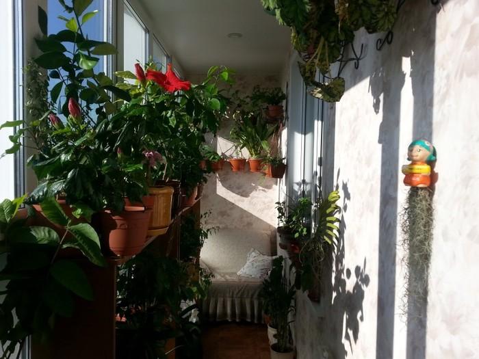 3925311_cveti_na_balkone (700x525, 99Kb)