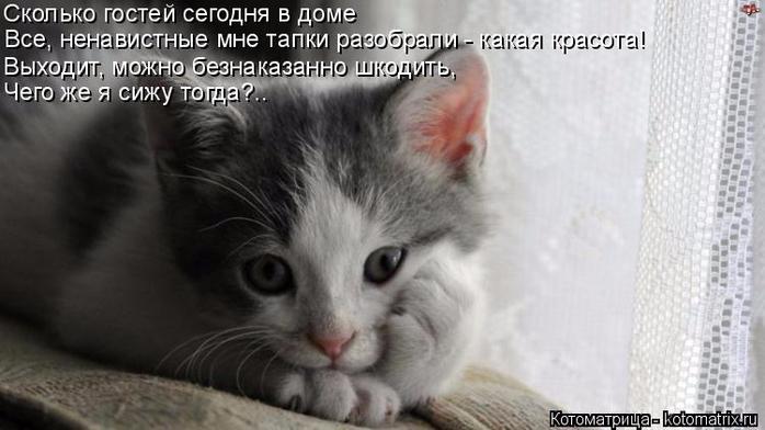 kotomatritsa_al (700x392, 199Kb)