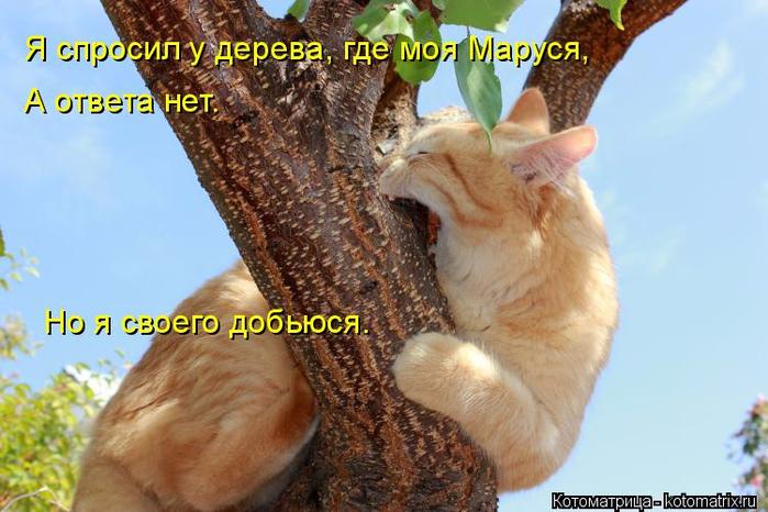 kotomatritsa_D (700x466, 347Kb)