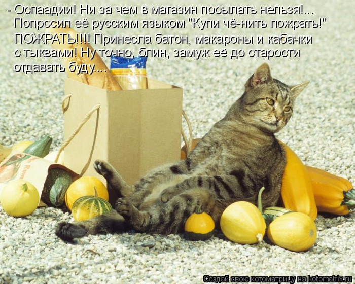 kotomatritsa_f0 (700x560, 471Kb)