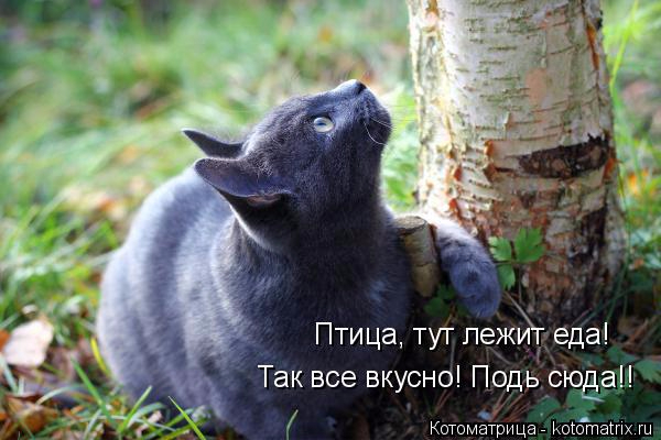 kotomatritsa_Fe (600x400, 224Kb)