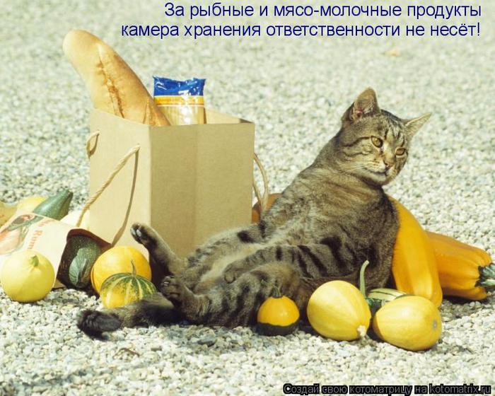 kotomatritsa_K_ (700x560, 449Kb)