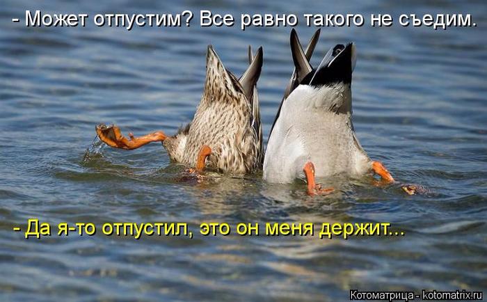 kotomatritsa_rY (700x434, 339Kb)
