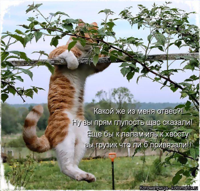 kotomatritsa_Tr (700x670, 558Kb)