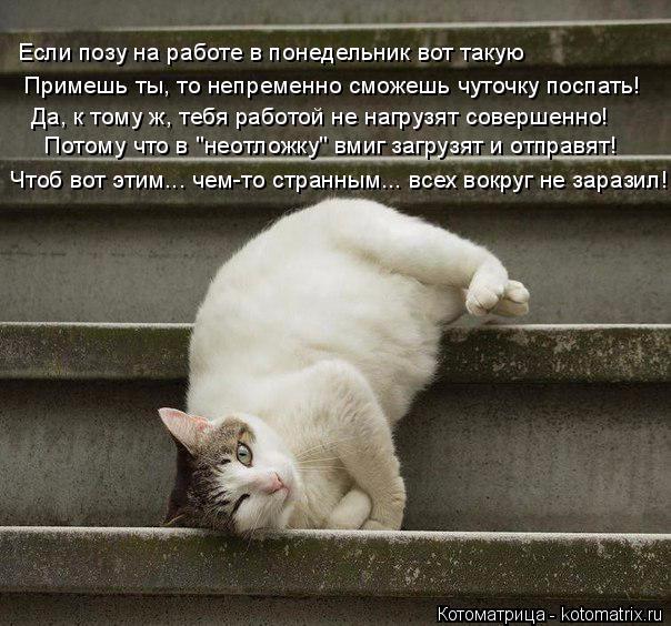 kotomatritsa_x (604x564, 293Kb)