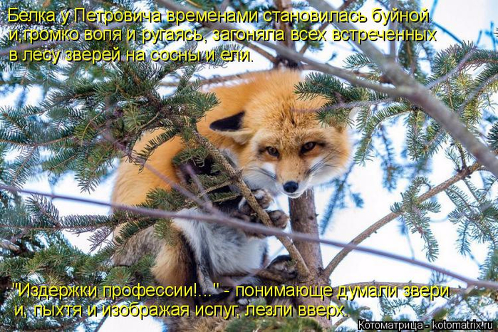 kotomatritsa_y (700x466, 516Kb)