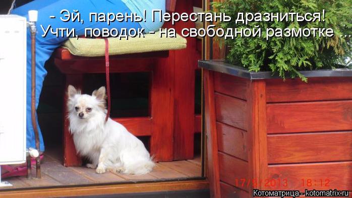 kotomatritsa_Z7 (700x393, 318Kb)
