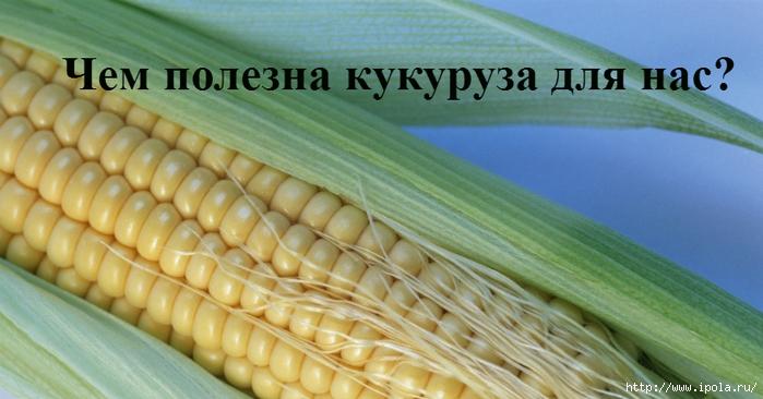 "alt=""Чем полезна кукуруза для нас?""/2835299_Chem_polezna_kykyryza (700x366, 208Kb)"