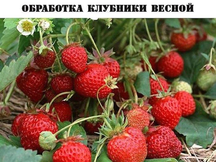 4121583_dY0umU6JFMQ (700x525, 102Kb)