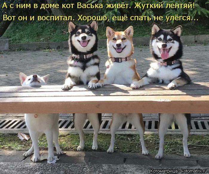 3509984_kotomatritsa_v_1 (700x584, 96Kb)