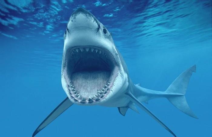 Акулы   потрясающие заблуждения!