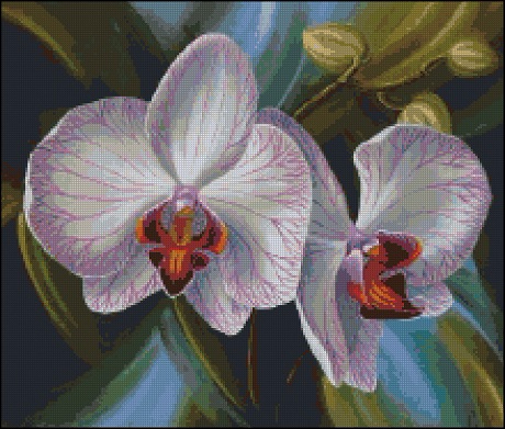 White Orchid (460x391, 234Kb)