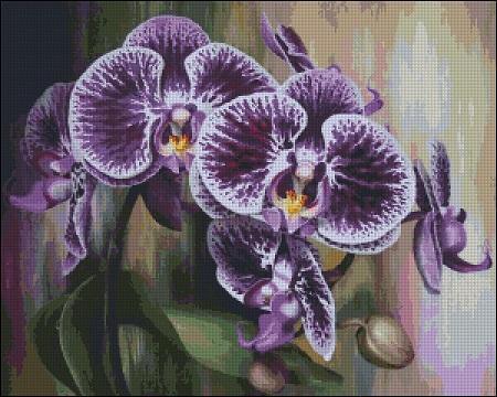 Purple orchid (450x360, 227Kb)
